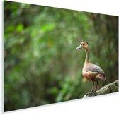 Rringtaling kijkt uit over het bos Plexiglas 120x80 cm - Foto print op Glas (Plexiglas wanddecoratie)