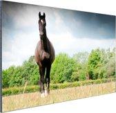 Merrie in een veld Aluminium 90x60 cm - Foto print op Aluminium (metaal wanddecoratie)
