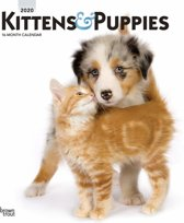 Kittens & Puppies 2020 2020 Square Wall