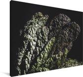Palmkool tegen een zwarte achtergrond Canvas 140x90 cm - Foto print op Canvas schilderij (Wanddecoratie woonkamer / slaapkamer)