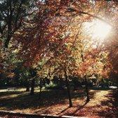 Schilderij - Park in de herfst