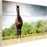 Merrie in een veld Hout 80x60 cm - Foto print op Hout (Wanddecoratie)