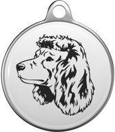 Amerikaanse Water Spaniel  Tommy Tag A020