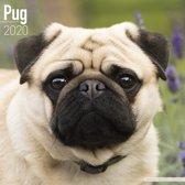 Pug Calendar 2020