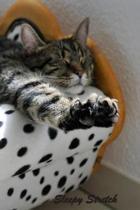 Sleepy Stretch