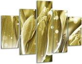 Glasschilderij Tulp | Goud, Wit | 100x70cm 5Luik | Foto print op Glas |  F005027