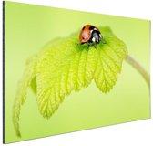 Lieveheersbeestje groen blaadje Aluminium 90x60 cm - Foto print op Aluminium (metaal wanddecoratie)