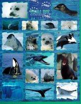 Sealife Dieren Stickers - Dolfijn, Zeehond, Orka