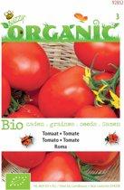 Buzzy® Organic - Tomaat Roma (BIO)