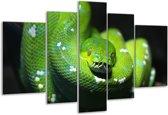 Glasschilderij Natuur | Groen, Zwart | 170x100cm 5Luik | Foto print op Glas |  F006124