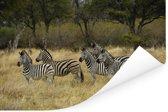 Groepje Zebras tussen gras in de Okavangodelta Poster 120x80 cm - Foto print op Poster (wanddecoratie woonkamer / slaapkamer)