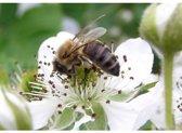 Veldbloemen Brandenburger bijenmengsel 250 gram