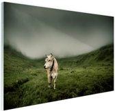 Koe in berggebied Glas 120x80 cm - Foto print op Glas (Plexiglas wanddecoratie)