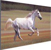 Vrolijk wit paard loopt in grasveld Aluminium 30x20 cm - klein - Foto print op Aluminium (metaal wanddecoratie)