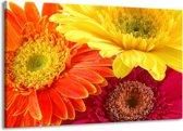 Canvas schilderij Bloem   Geel, Oranje, Rood   140x90cm 1Luik
