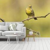 Fotobehang vinyl - Foto van een groenling zittend op een takje breedte 375 cm x hoogte 280 cm - Foto print op behang (in 7 formaten beschikbaar)