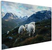 Familie portret schapen Glas 90x60 cm - Foto print op Glas (Plexiglas wanddecoratie)