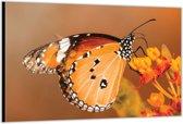 Dibond –Vlinder– 120x80 Foto op Aluminium (Wanddecoratie van metaal)