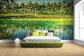 Rijstvelden en palmbomen in Azie Fotobehang 380x265