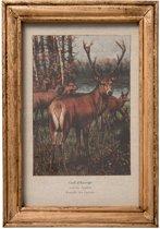 Clayre & Eef Schilderij 25x2x35 cm