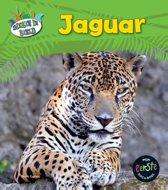 Dieren in beeld - Jaguar