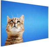 Kat met blauwe lucht Aluminium 180x120 cm - Foto print op Aluminium (metaal wanddecoratie) XXL / Groot formaat!