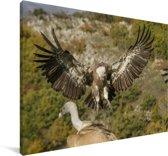 Vale gier met gespreide vleugels Canvas 140x90 cm - Foto print op Canvas schilderij (Wanddecoratie woonkamer / slaapkamer)