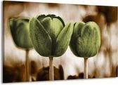 Canvas schilderij Tulpen | Bruin, Groen | 140x90cm 1Luik
