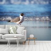 Fotobehang vinyl - Lachmeeuw loopt over de kustlijn breedte 375 cm x hoogte 300 cm - Foto print op behang (in 7 formaten beschikbaar)