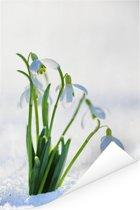 Sneeuwklokjes in de sneeuw Poster 120x180 cm - Foto print op Poster (wanddecoratie woonkamer / slaapkamer) XXL / Groot formaat!