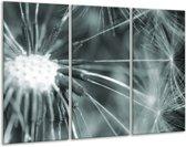 Glas schilderij Bloem | Grijs, Groen | 120x80cm 3Luik | Foto print op Glas |  F006508