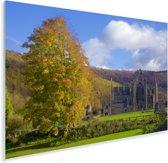 Herfstkleuren bij de Tintern Abbey in Wales Plexiglas 90x60 cm - Foto print op Glas (Plexiglas wanddecoratie)