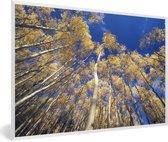 Foto in lijst - Onderaanzicht van de bossen van het Nationaal park Santa Fe in Panama fotolijst wit 60x40 cm - Poster in lijst (Wanddecoratie woonkamer / slaapkamer)