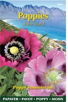Buzzy® Poppies of the world - Papaver Slaapbol