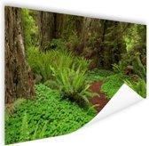 Donkerbruin pad  door het bos Poster 60x40 cm - Foto print op Poster (wanddecoratie woonkamer / slaapkamer)