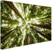 Hoge groene bomen in jungle Canvas 80x60 cm - Foto print op Canvas schilderij (Wanddecoratie)