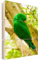 Groene edelpapegaai zit op een takje Vurenhout met planken 60x90 cm - Foto print op Hout (Wanddecoratie)