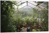 Dibond –Greenhouse– 90x60cm Foto op Dibond;Aluminium (Wanddecoratie van metaal)