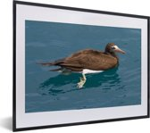 Foto in lijst - Een bruine gent zwemt in het blauwe water fotolijst zwart met witte passe-partout klein 40x30 cm - Poster in lijst (Wanddecoratie woonkamer / slaapkamer)