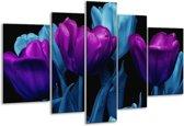 Glasschilderij Tulp   Paars, Blauw, Zwart   170x100cm 5Luik   Foto print op Glas    F003649