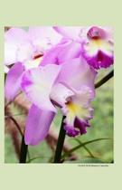 Orchid 2014 Weekly Calendar