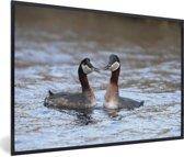 Foto in lijst - Een koppel roodhalsfuten in het water fotolijst zwart 60x40 cm - Poster in lijst (Wanddecoratie woonkamer / slaapkamer)