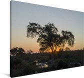 Krugerpark tijdens de avond in Zuid-Afrika Canvas 90x60 cm - Foto print op Canvas schilderij (Wanddecoratie woonkamer / slaapkamer)