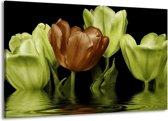 Canvas schilderij Tulpen | Groen, Bruin | 140x90cm 1Luik