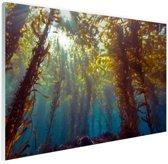 Zonlicht en planten onder water Glas 90x60 cm - Foto print op Glas (Plexiglas wanddecoratie)