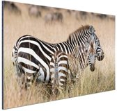 Zebras in de natuur Aluminium 90x60 cm - Foto print op Aluminium (metaal wanddecoratie)