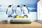 FotoCadeau.nl - Drie pinguins portret Fotobehang 380x265
