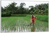 Plexiglas –Aziatische Boer in een Rijstveld– 60x40cm (Wanddecoratie van Plexiglas)