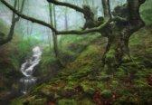 Fotobehang The Enchanted Forest|V8 - 368cm x 254cm|Premium Non-Woven Vlies 130gsm