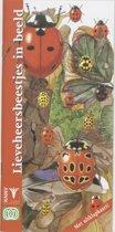 Lieveheersbeestjes in beeld
